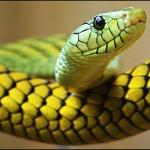 Reptilien - das neue Risiko