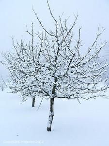 Winterbaum -  Bild: Magnus Rosendahl