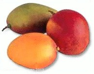 Frucht der Götter: Die Mango bringt Exotik in die Küche
