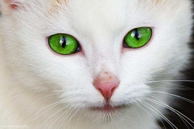 Risiko von Zoonosen im Kinderhaushalt: Der richtige Umgang mit Haustieren