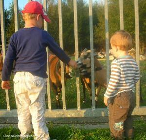 kids-tiere
