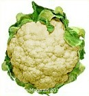 cauliflower_1