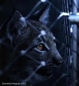 Skandalös: Mützen mit Katzenfell von Tom Tailor und Drogerie Müller