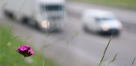 Feinstaubbelastung: Wer an der Hauptstraße lebt, stirbt womöglich früher