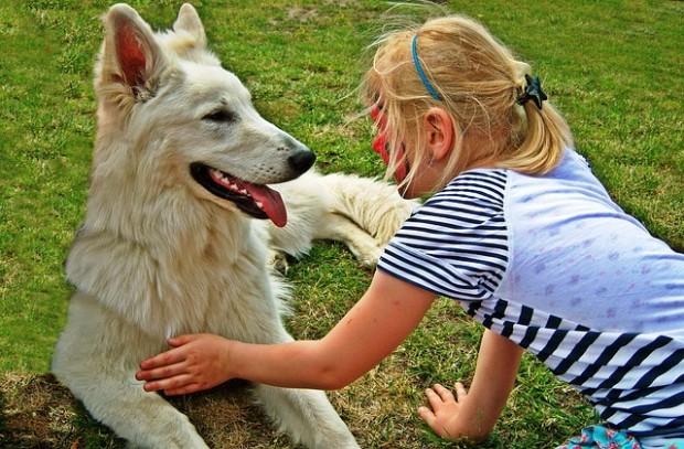 Hunde sind keine Schmusetiere!