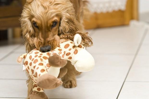 Großer Hund, kleines Baby