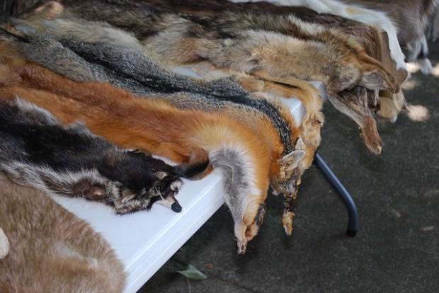 """planet e.-Dokumentation """"Vorsicht, Pelz!"""" über das Leid asiatischer Zuchttiere für die Wintermode"""