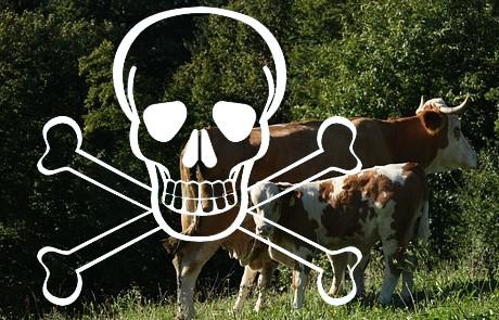 Österreich: Hexachlorbenzol - Kärnten warnt erneut vor verseuchten Lebensmitteln