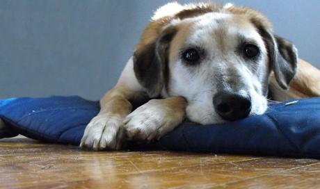 Hundefutter im Test: Jedes zweite Feuchtfutter fällt durch