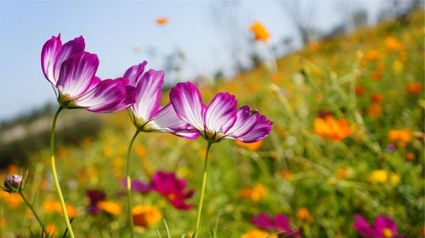 flowers-698678_640