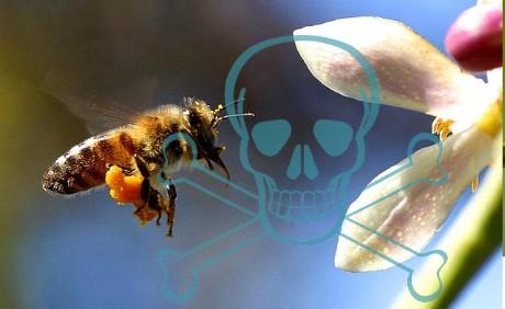Literweise Insektengift vom Grabbeltisch