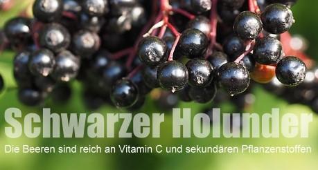 Wilde Früchte: Schwarzer Holunder - als Saft, Sirup oder Gelee