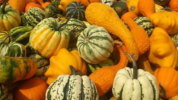 pumpkin-179525_640