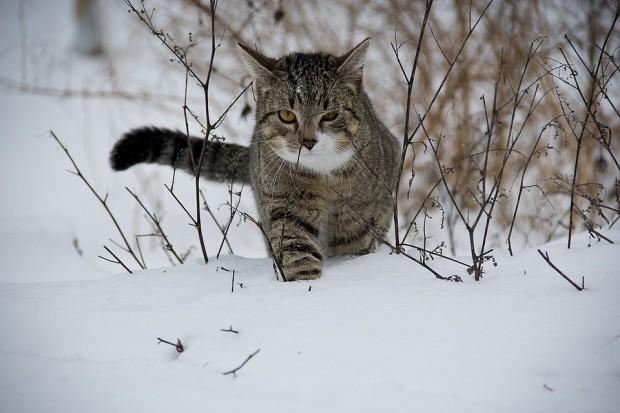 Das Richtige für Ihre Katze im Winter