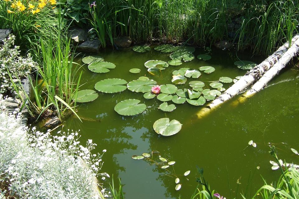 Gartenteich kindersicher anlegen cleankids magazin for Goldfischteich pflege
