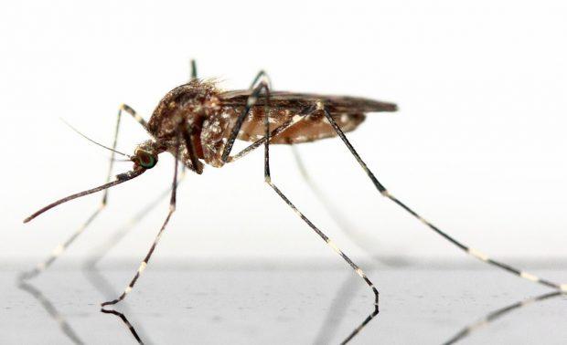 Mückenstiche – Tipps zur Behandlung und Vorbeugung