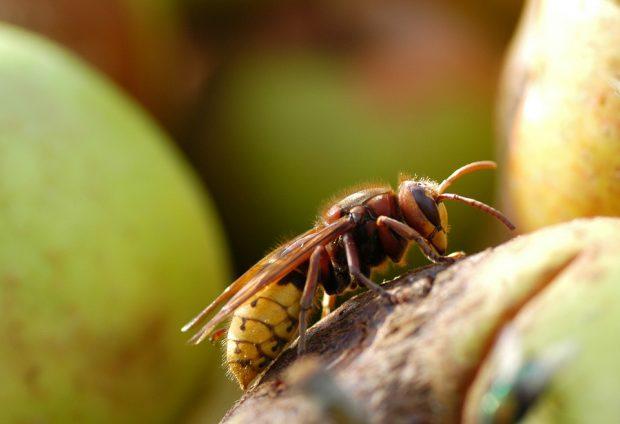 Insektenstich bei Kindern: Bei entfernter Hautreaktion mitnahme eines Notfallsets ratsam