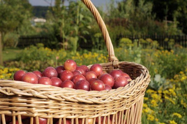 """TV-TIPP: """"planet e."""" im ZDF: Wie regional sind unsere Lebensmittel?"""