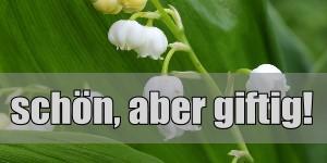 Eltern aufgepasst: Jetzt ist Blütezeit vieler Giftpflanzen