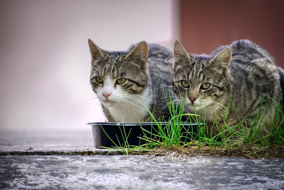 Feuchtfutter für Katzen: Bei jedem dritten stimmt der Nährstoffmix nicht