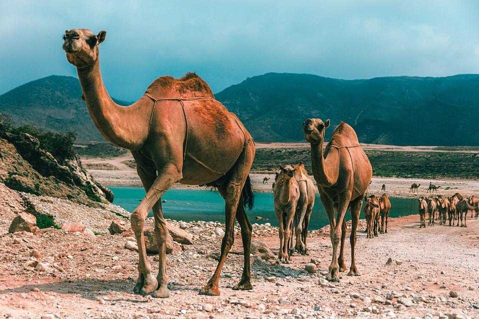 Mit seiner märchenhaften Umgebung ist Oman ein ideales Reiseziel für die ganze Familie