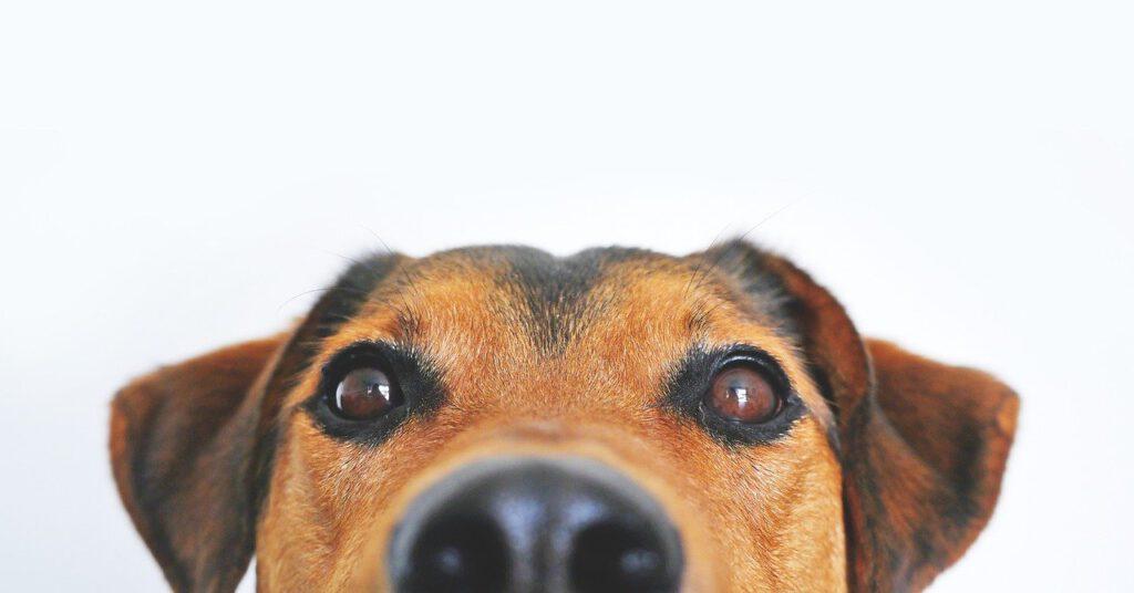 Gesunde Snacks für unsere Fellnasen: Welches Leckerchen für den Familienhund?